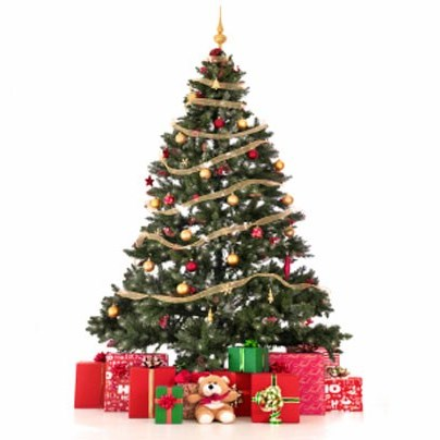 christmas tree - Silvertip Fir Christmas Tree